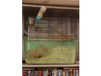 2x female gerbils with cage