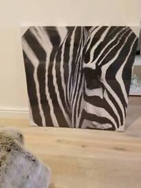 Large zebra canvas picture