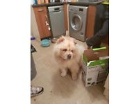 3 1/2 year old chow a very lay back dog.. good with children. He is death