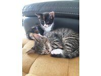 1 girl & 1 boy kittens left for sale