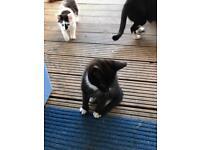 2 playful kittens