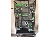 Cage setup for sugar gliders or rats