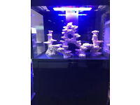 Aqua one 300 aquareef s2 latest Marine tropical fish Tank aquaruim