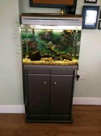 Complete tropical tank set up - including ehiem external filter, geater and bog wood
