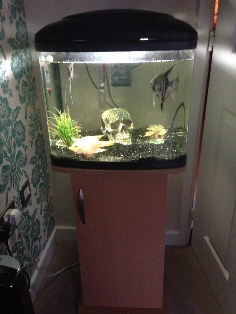 Fully set up fish tank with stand
