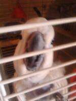 looking to take in another parrot and give a forever home