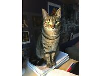 Female postgrad with a cat looking to rent a furnished flat (2 bedrooms preferred)
