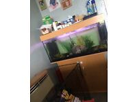 Fish tank swaps for smaller or offers :)