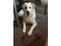 Pet friendly house/flat. Medium sized dog. Moving ASAP