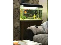 Fish tank 100 litre with accessories