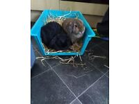 Rabbit hutch wanted