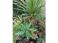 Moving Flat, Various Garden Plants and Pots for Quick Sale