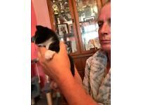 Male black and white kitten