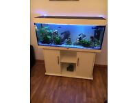 240litre tropical fish tank complete set up including fish