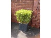 8 Lovely granite plant pots £20 each