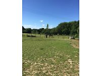 Stables and field to rent