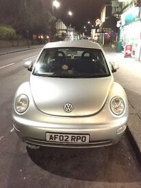 Lovely silver beetle bug
