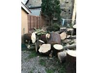 Firewood free - lawson cypress logs (softwood) woodburner