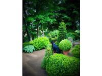 Gardener. Plantsman
