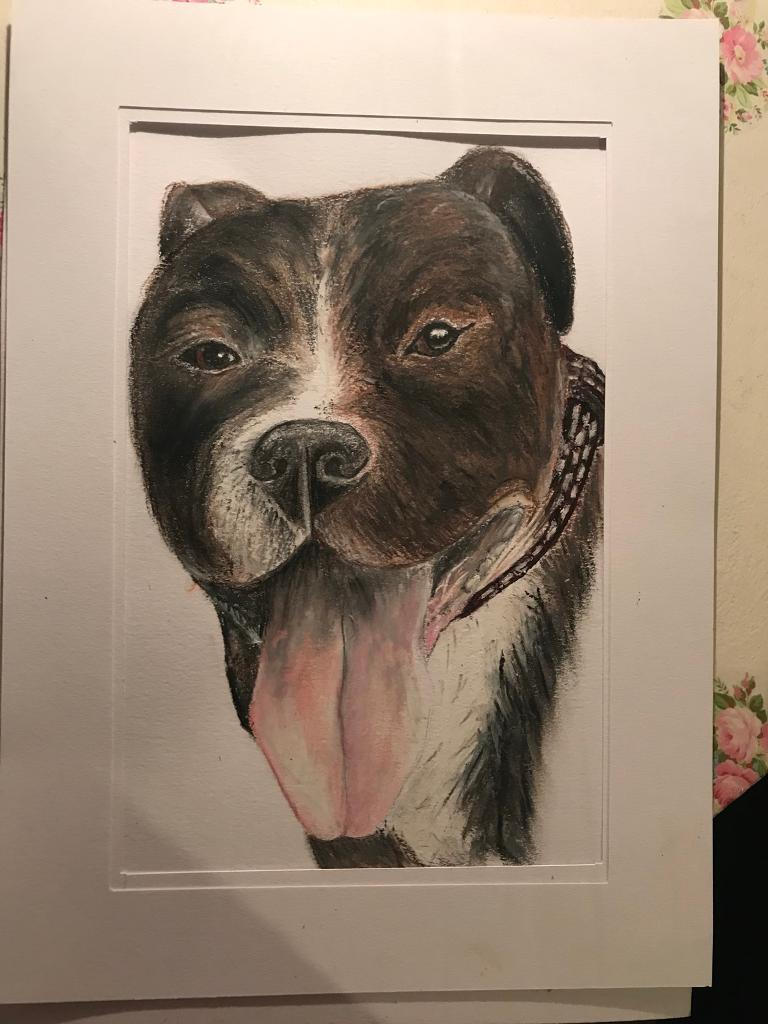 Pet drawings/paintings