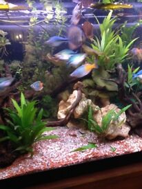Full Tropical Tank set-up including fish