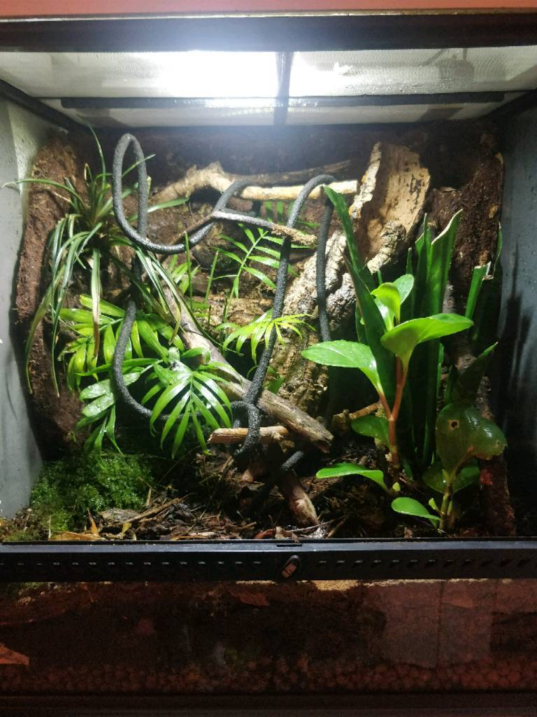 Crested Geckos And Setup In Ballygowan County Down