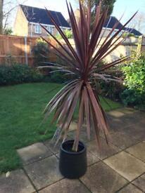 Garden plant and pot