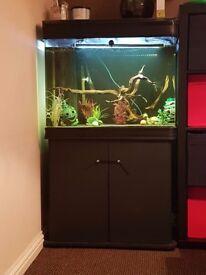Boyu fish tank 220 litres