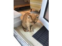 Found cat - ginger - Bethnal green