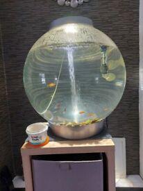 60 litre bio orb full set up + fish