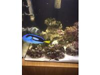 Marine fish tank full set up
