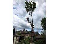 Tree surgeon based in Edinburgh and the Lothian's