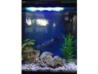 Fish tank (full setup)