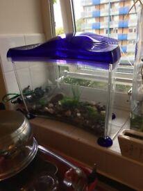 small goldfish tank