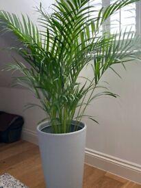 Plant with vase - £30 ONO