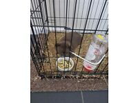 Rabbit with indoor cage for sale 50 pound