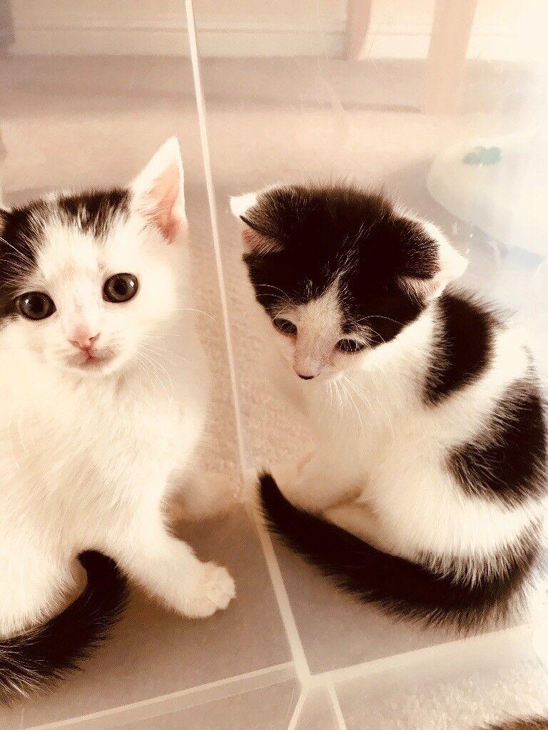 Beautiful adorable kittens