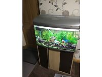 Fish tank for sale 2ft by 1ft by 1.5ft high