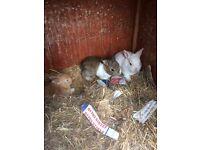 Rabbit ( 3 )