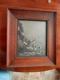 Two framed seabird pictures