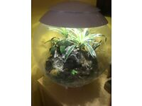 BiOrb AIR 60 Litre Automatic Terrarium with LED Lighting