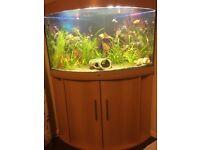 Beech Juwel 190L Corner Fish Tank Full Setup