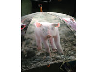 Umbrella, large with pig design, unused.