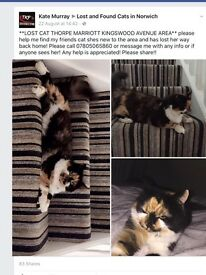 Missing female cat