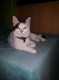 A cute, 8 month kitten looking for a new home.