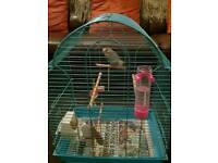 Bugie and cage for sale in Barnsley