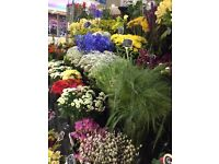 Flor Do Amor Florist -Wood Green Shopping City