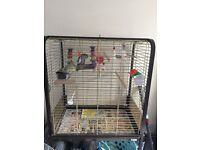 2 cockatiels with cage