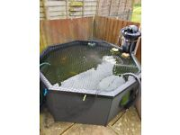 Koi for sale and equipment