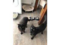 2 black adorable kittens